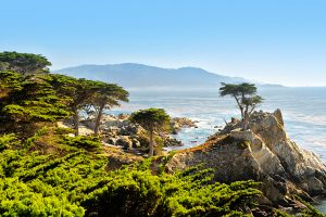 Monterey, USA - October 27, 2011: The famous Lone Cypress Pine Tree at Pebble Beach on 17-mile Drive. The tree is located between Cypress Point and Pebble Beach golf courses.